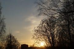 Fondo di sera del paesaggio degli alberi Fotografia Stock