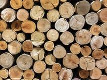 Fondo di sezione trasversale dei ceppi di albero fotografie stock
