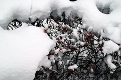 Fondo di Snowy cespuglio Fotografia Stock Libera da Diritti