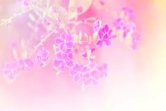 Fondo di sogno del fiore Fotografia Stock