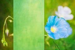 Fondo di stile della cartolina con i fiori Fotografie Stock
