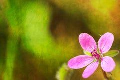 Fondo di stile della cartolina con il fiore rosa Fotografia Stock
