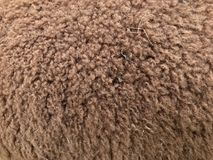 Fondo di struttura dei capelli dell'alpaga di Brown Fotografia Stock Libera da Diritti