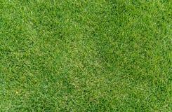 Fondo di struttura del campo di erba verde per il campo da giuoco ecc dei bambini Immagini Stock Libere da Diritti