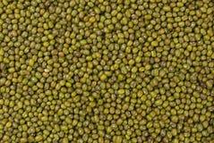 Fondo di struttura del fagiolo del mungo o di Mung nutrizione bio- Ingrediente di alimento naturale immagine stock libera da diritti