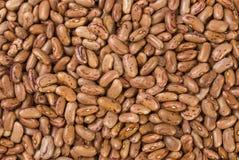 Fondo di struttura del fagiolo di pinto nutrizione bio- Ingrediente di alimento naturale fotografia stock libera da diritti