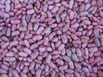 Fondo di struttura del fagiolo rosso I fagioli sono coltivati con l'agricoltura biologica in Toscana, Italia Immagini Stock
