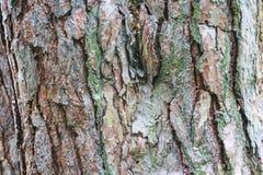 Fondo di struttura del legno duro Vecchio fondo di legno di struttura della plancia immagini stock libere da diritti