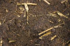 Fondo di struttura del suolo e del fertilizzante organico Immagine Stock