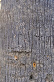 Fondo di struttura dell'albero Fotografie Stock
