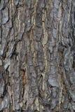 Fondo di struttura dell'albero della pelle Fotografia Stock