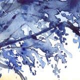 Fondo di struttura dell'estratto del fogliame dei blu navy dell'acquerello Fotografia Stock