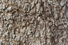 Fondo di struttura della corteccia di albero Fotografie Stock Libere da Diritti