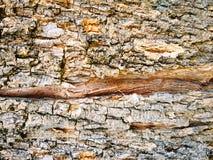 Fondo di struttura della corteccia di albero incrinata immagini stock