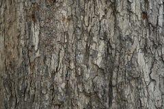 Fondo di struttura della corteccia, dettaglio di legno Fotografie Stock Libere da Diritti