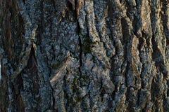 Fondo di struttura della corteccia di albero Immagine Stock Libera da Diritti