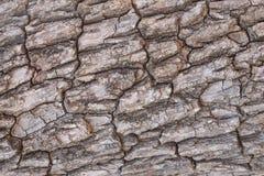 Fondo di struttura della corteccia di albero Immagini Stock Libere da Diritti
