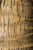 Fondo di struttura della noce di cocco Fotografia Stock