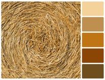 Fondo di struttura della paglia con i campioni di colore della tavolozza Immagini Stock Libere da Diritti