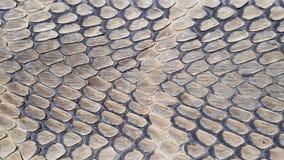 Fondo di struttura della pelle di serpente fotografia stock