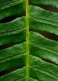 Fondo di struttura della pianta di Leafe Immagine Stock