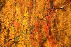 Fondo di struttura di pietra bagnata arancio della parete della roccia all'aperto Fotografie Stock
