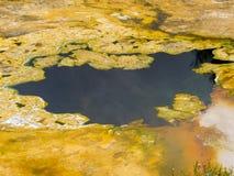Fondo di superficie della natura di crescita delle alghe dell'acqua immagine stock