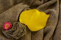 Fondo di tela grigia tricottata della lana del ` s della capra fatta con il knitti Fotografie Stock