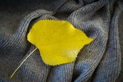 Fondo di tela grigia tricottata della lana del ` s della capra fatta con il knitti Fotografia Stock