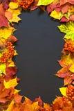 Fondo di tema di autunno con le foglie di acero Fotografia Stock