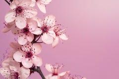 Fondo di tempo di primavera Fotografia Stock