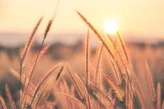 Fondo di tramonto e dell'erba fotografia stock