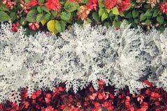 fondo di Tri colore dei fiori reali Fotografia Stock Libera da Diritti