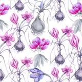 Fondo di un fiore del croco con una radice Reticolo senza giunte Fotografie Stock
