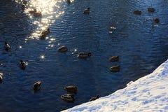 Fondo di una superficie del fiume che splende da una luce solare Fotografia Stock Libera da Diritti