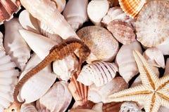 Fondo di vari conchiglie, stelle marine e ippocampo Immagine Stock