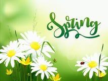 Fondo di vendita della primavera con il bello fiore variopinto illustrazione di stock