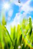Fondo di verde della sfuocatura della molla naturale di astrattismo Immagine Stock