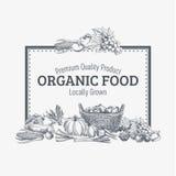 Fondo di vettore con alimento biologico disegnato a mano Immagine Stock