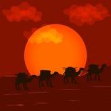 Fondo di vettore con camelcade Fotografia Stock Libera da Diritti