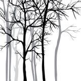 Fondo di vettore con gli alberi Fotografia Stock