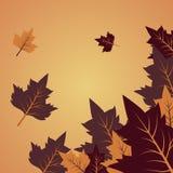 Fondo di vettore con il testo di Autumn Leaves And Space For Fotografie Stock