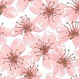 Fondo di vettore del fiore di ciliegia (Senza cuciture illustrazione di stock