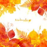 Fondo di vettore dipinto acquerello delle foglie di autunno Fotografie Stock Libere da Diritti
