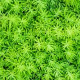 Fondo di vista superiore del primo piano dei folia di verde della foglia delle felci di Beautyful fotografia stock libera da diritti