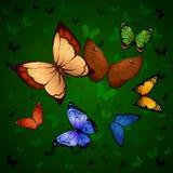 Fondo di volata variopinta delle farfalle Immagini Stock Libere da Diritti