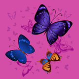 Fondo di volata variopinta delle farfalle Immagini Stock