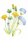 Fondo dibujado mano abstracta del arte de la acuarela con los dientes de león amarillos Ilustración del vector Foto de archivo