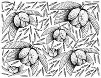 Fondo dibujado mano de Chalta o de las frutas de Apple del elefante Imagen de archivo