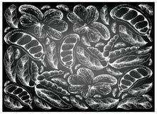 Fondo dibujado mano de la cola Millenii y de las frutas de Dasymaschalon Lomentaceum Fotos de archivo libres de regalías
